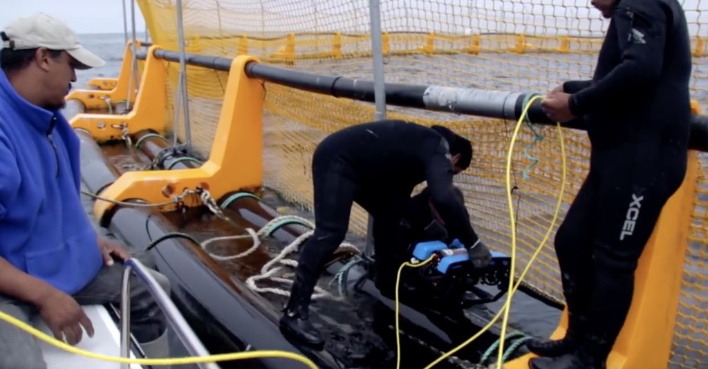 Using an ROV to inspect a net in the aquaculture industry.
