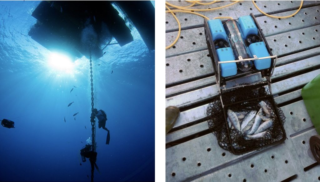 aquaculture-rovs-in-action